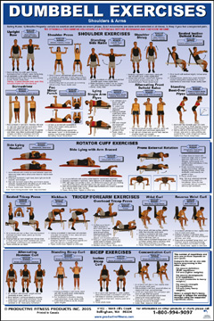 dumbbell exercise poster shoulders  arms  fitness